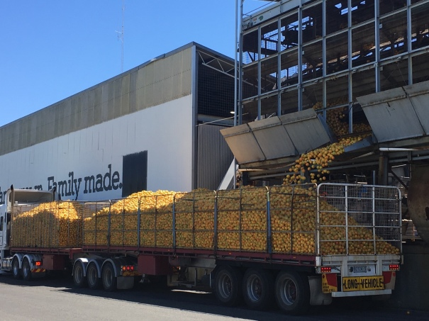 A load of oranges at Nippy's factory in Waikerie
